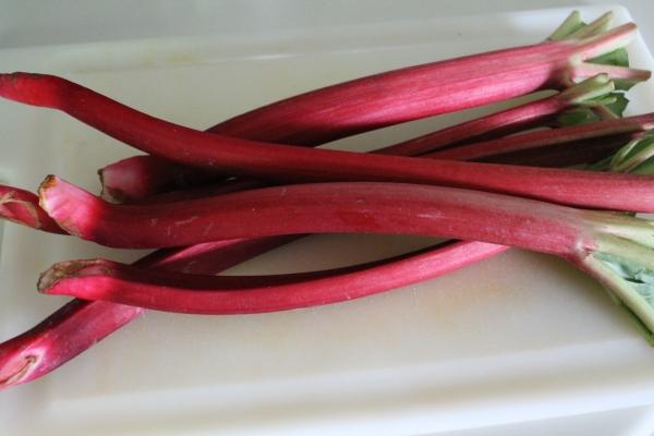 Bright Red Rhubarb